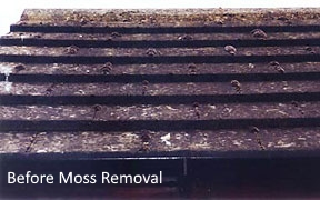 Before moss killer